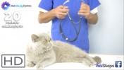 Diagnostyka ciąży, poród i okres okołoporodowy u kotów.