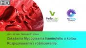 Zakażenia Mycoplasma haemofelis u kotów. Rozpoznawanie i różnicowanie. (2/3)