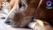 Diagnostyka laboratoryjna chorób wątroby u psów. Zrozumienie wyników podstawą diagnozowania
